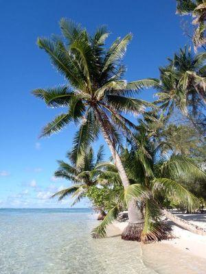 Motu Mahaea, Tahaa dans Iles sous le Vent cocotier-sur-motu