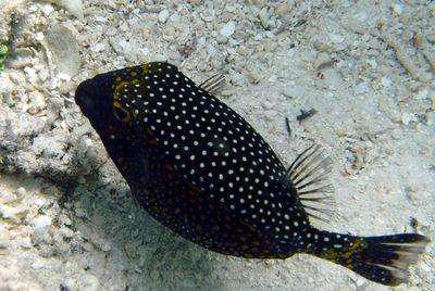 Rencontre ichtyologie france