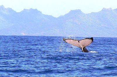 baleine2.jpg
