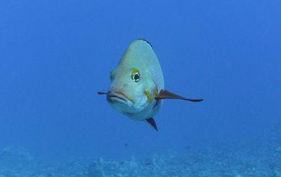 Plongée à Opunohu, Moorea dans Aquatique Plongée sous marine PICT2754