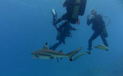 Plongée à Raiatea dans Aquatique Plongée sous marine PICT1088