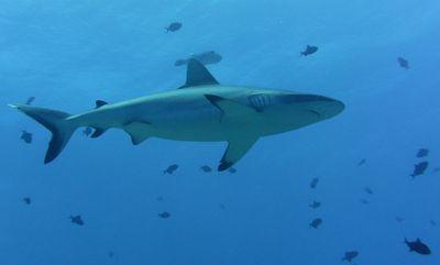 PICT2012 dans Aquatique Plongée sous marine