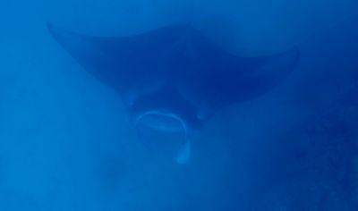 P3310215 dans Aquatique Faune