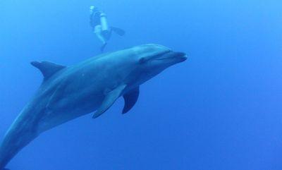 PICT2833 dans Aquatique Plongée sous marine