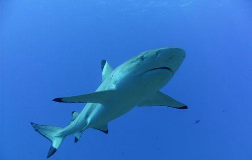 Plongée à Tahiti dans Aquatique Plongée sous marine pict1735