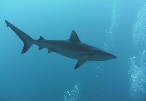 pict1741 dans Aquatique Plongée sous marine